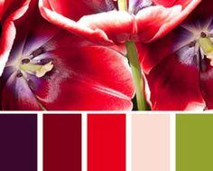 farbkombinationen-und-wandfarbe-ideen-mit-farbe-lila-und-rot