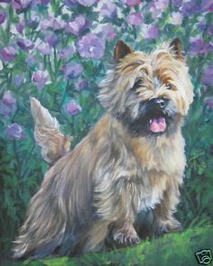 Gorgeous painting of Cairn Terrier CANVAS PRINT painting dog LSHEP art 8x10