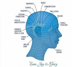 Train as an Access Consciousness Bars Practioner Brain Mapping, Access Bars, Access Consciousness, Horse And Human, Deep Thinking, Deep Relaxation, Knowledge And Wisdom, Reiki Energy, Healthy Relationships