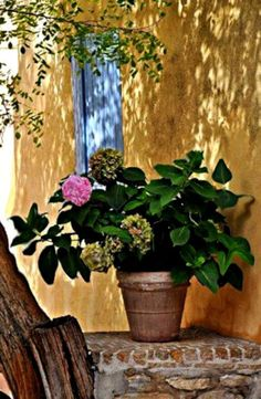 So, nothing like that to plunge in photographs taken in Provence in the sweet moments Insousciance where they sought the shadows and scenes ideal . Hortensia Hydrangea, Hydrangeas, Peonie, Pot Jardin, French Countryside, Dream Garden, Container Gardening, Succulent Containers, Container Flowers