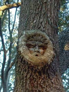 Wood Spirits:  Can't you just imagine the artist spending all that time, then just leaving it for people to discover by accident?