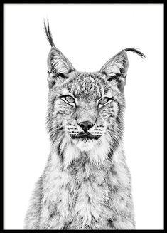 Lynx Poster i gruppen Posters / Djur hos Desenio AB Buy Posters Online, Online Art, Desenio Posters, Poster Photo, Unicorn Poster, Country Wall Art, Animal Graphic, Black Unicorn, Animal Posters