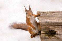 squirrels home by Geert Weggen on 500px