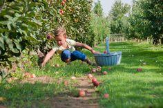 http://www.minitree.nl/3-appelboom