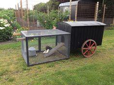 Fru Pedersens have: Mini skurvogn til høne med kyllinger.