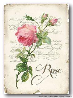 Rose for decoupage Decoupage Vintage, Vintage Diy, Vintage Labels, Vintage Ephemera, Vintage Cards, Vintage Paper, Vintage Postcards, Images Vintage, Vintage Pictures