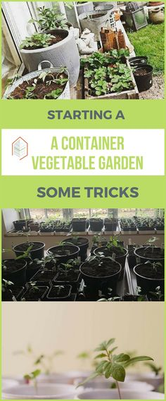 How to Start a Container Vegetable Garden: Some Tricks Want to know how to start a container vegetable garden? You don't need a plot of land to grow your fresh greens but just few containers! #urbangardening #urbanfarming #gardening #diy #garden #ugrpost