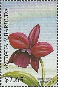 Laeliocattleya Mini Purple) (Antigua and Barbuda) (Orchids of the world) Mi:AG 2208 Postage Stamp Art, Purple Orchids, You Are The World, Fauna, Mailbox, Ephemera, Islands, Poster, Tropical