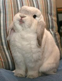 This cute bunny is smiling!