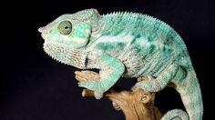 Network like a chameleon for career success