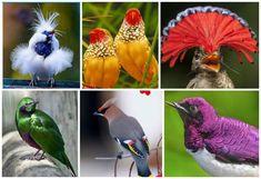 Животные | Записи в рубрике Животные | Дневник мурзик49 : LiveInternet - Российский Сервис Онлайн-Дневников