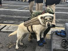 Frida, rescue Dog, saved 50 lives in Mexico, picture from euronews.com