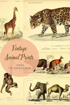 Wild Cat Species, Picture Boxes, Boho Home, Indian Elephant, Giraffe Print, Animal Paintings, Natural History, Vintage Images, Vintage Prints