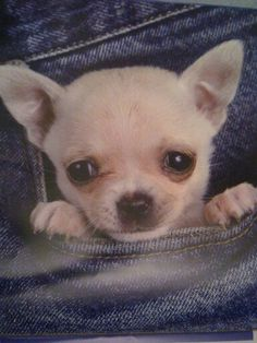 Pocket Full Of Sunshine, High Five, French Bulldog, Puppies, Animales, Pictures, Give Me 5, Cubs, French Bulldog Shedding