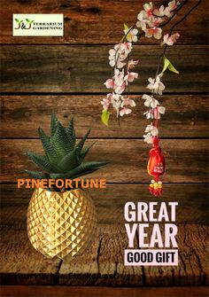 Lucky Pineapple Succulent for the new year. New Year 2020, Terrarium, Pineapple, Succulents, Best Gifts, Gardening, Plants, Terrariums, Pine Apple