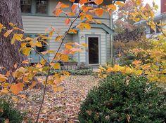 House with Autumn Leaves www.fiskars.com