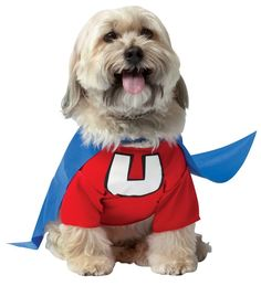 This Under Dog costume for dogs might be the perfect way to show the neighbors…