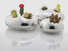 Fun idea Cactuses apparently decrease the magnetic field when used next to electronic equipment.