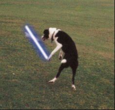 Animals with lightsabers!