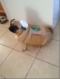 just too hilarious. starbucks dog costume