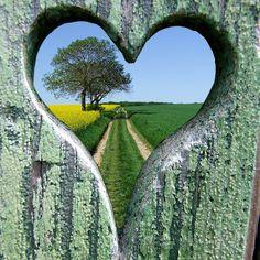 Coeur chemin arbre colza by Jean G68, via Flickr