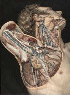 """tonguedepressors: """" Nicolas Henri Jacob - Illustration for Traité complet de l'anatomie de l'homme comprenant la médecine opératoire (1831-1854) by Jean-Baptiste Marc Bourgery Dissection of the neck..."""