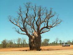 ~ BROOME WESTERN AUSTRALIA Australia Day, Queensland Australia, Australia Living, Australia Travel, Broome Western Australia, New Zealand Cruises, Australian Photography, Baobab Tree, Australian Plants