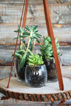 DIY Wood Slice Plant Stand - Easy Wood Plant Stand Project - ELLE DECOR