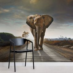 elephant-animal-square-1-wall-murals