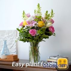 Growing plants can be hard for some, which is why we've come up with some plant hacks that will help your indoor and outdoor garden grow. Garden Terrarium, Succulent Terrarium, Succulents Garden, Full Sun Container Plants, Container Gardening, Mini Orquideas, Greenhouse Gardening, Gardening Tips, Planting Roses