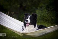 Lazy summer day. by mzurawinska