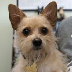 Dog Adoption San Diego - Adopt A Dog   Cat Adoption San Diego - Adopt A Cat   Helen Woodward Animal Center