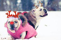5x7 English Bulldog Christmas Card by snowy4052002 on Etsy, $5.00