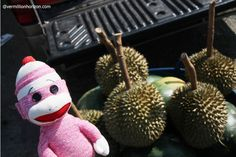 Lil' Squirt followed his nose to hunt down  the notoriously smelly tropical fruit, the durian (Bangkok, Thailand)