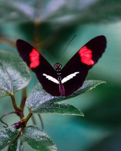 With over different types of butterflies flying around Costa Rica, you are bound to spot several of these colorful creatures during… Types Of Butterflies, Butterflies Flying, Different Types, Our Planet, Costa Rica, Moth, Insects, Creatures, Butterfly