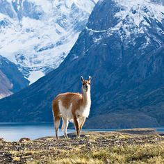 lovely creature in Patagonia
