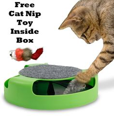 Gizmo cat Product's Cat Mice Toy For Kittens  Catch The Mouse Motion Cat Toy Sold By Gizmo cat Products  Most Interactive Toy For Cats  Incredibly Fun To Play With and Amusing To Watch  Get It Now >>> More infor at the link of image  : Cat toys