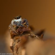 Personal favourites of Macro wold group I Close Up, Shots, Group, World, Gallery, Animals, Animales, Roof Rack, Animaux