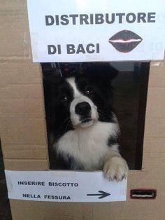 Trip For Dog - Google+