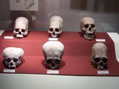 Nephilim Giants / Angels / Aliens of the Past / Scheletro interista / Ancient Human Skeletons Ancient Aliens, Aliens And Ufos, Ancient History, Alien Skull, Human Skull, Ancient Mysteries, Ancient Artifacts, Crane, Nephilim Giants