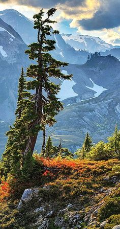 Artist's Point, Mount Baker, Washington