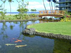 Koi pond and bridge on the grounds of the Hawaii vacation resort, The Whaler. A very peaceful place to take a walk or sit and watch the fish! More Maui vacation rentals: http://vacation-maui.com