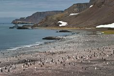 Antarctica Tours & Holidays   Intrepid Travel