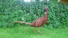 Giant Pheasant – Woody Fox