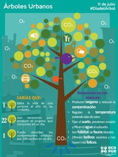 Beneficios de los #árboles urbanos, #infografia por @eco_pue