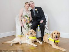 Blind couple brought together by their smitten guide dogs get married » DogHeirs | Where Dogs Are Family «