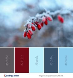 Color Palette ideas from 693 Winter Images Color Schemes Colour Palettes, Red Colour Palette, Color Palate, Color Combos, Color Blue, Christmas Palette, Christmas Colour Schemes, Palette Pantone, Best Office