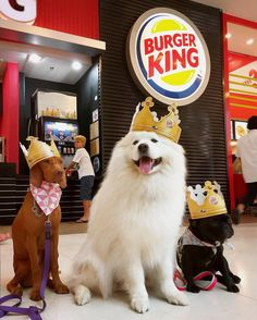 We three kings of buuuurrrgggerrrs @we_love_samoyed