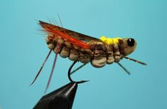 Fly Tying Nation: Extended Abdomen Hopper X. For more fly fishing info follow and subscribe www.theflyreelguide.com Also check out the original pinners/creators site and support