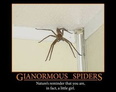 Giant Spider-demotivational posters Natures reminder that you are, in fact, a little girl